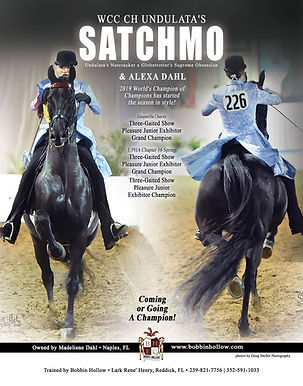 WCC CH Undulata's Satchmo ridden by Alexa Dahl and trained by Lark Henry