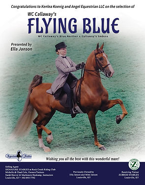 Callaway's Flying Blue_Signature Stables