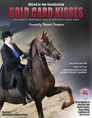 INGLESIDE FARM_GOLD CARD KISSES_ASB_FOR SALE
