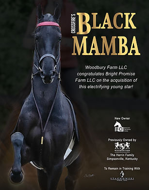 Crossfire's Black Mamba_ American Saddlebred