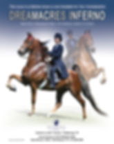 American Saddlebred_Dreamacres Inferno_Five-Gaited_For Sale