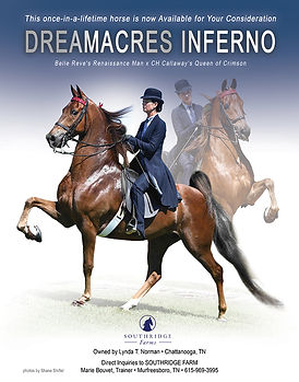 American Saddlebred_Dreamacres Inferno_Five-Gaited_For Sale