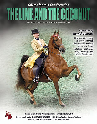THE LIME AND THE COCONUT