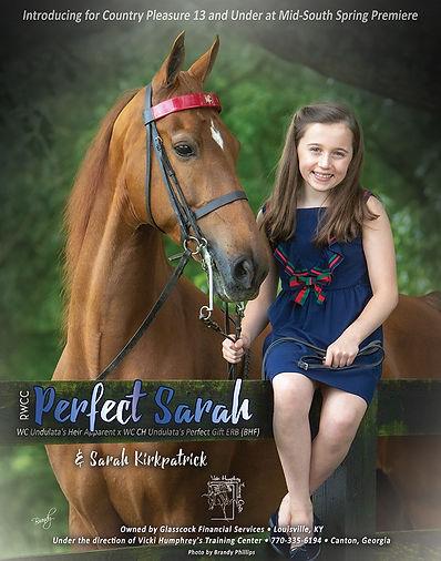 RWCC PERFECT SARAH_AMERICAN SADDLEBRED