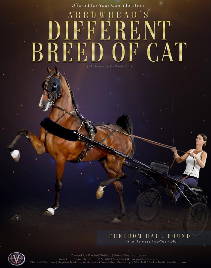 Visser_Seifert_Breed-of-Cat_MM_Aug_2020.