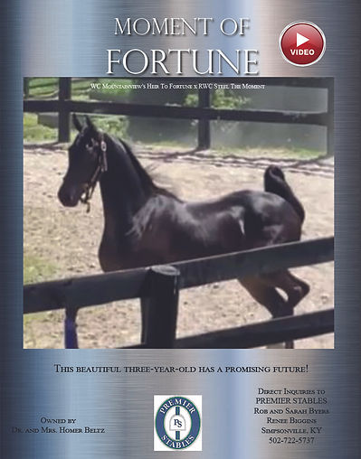 Moment of Fortune _ASB_For Sale