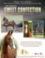 RWC Stonecroft Sweet Confection_American Saddlebred_Broodmare_for sale