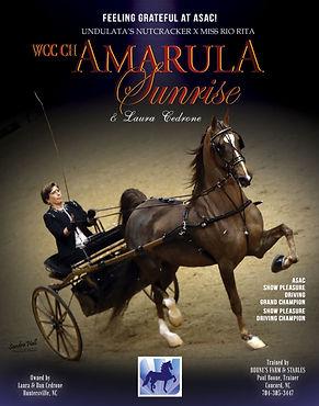WCC CH Amarula Sunrise