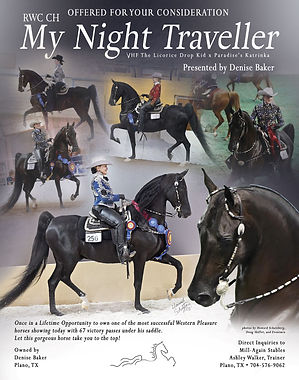 Night Traveller_Western Pleasure_ASB_For Sale