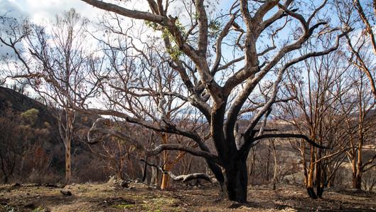 Volkswagen quyên góp một triệu đô la để trồng lại rừng tại Úc