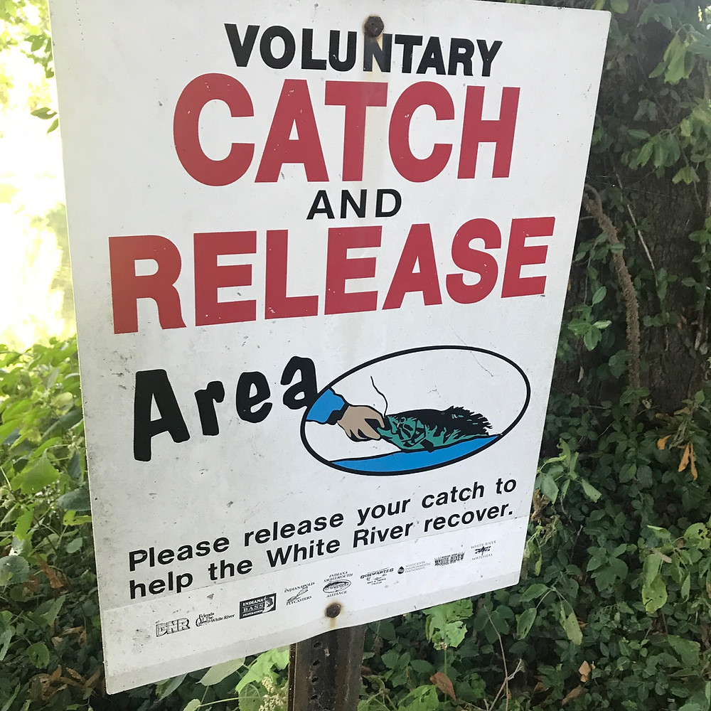 white river fish kill catch and release
