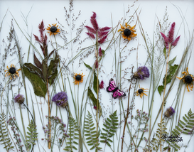 """Wild Meadow: Thistles, Black-eyed Susans and celosia create this ground-view of a wild meadow. Encapsulated in resin on a clear glass surface so the negative space remains translucent. Black frame  18"""" x 22""""  $345 FREE shipping in US"""
