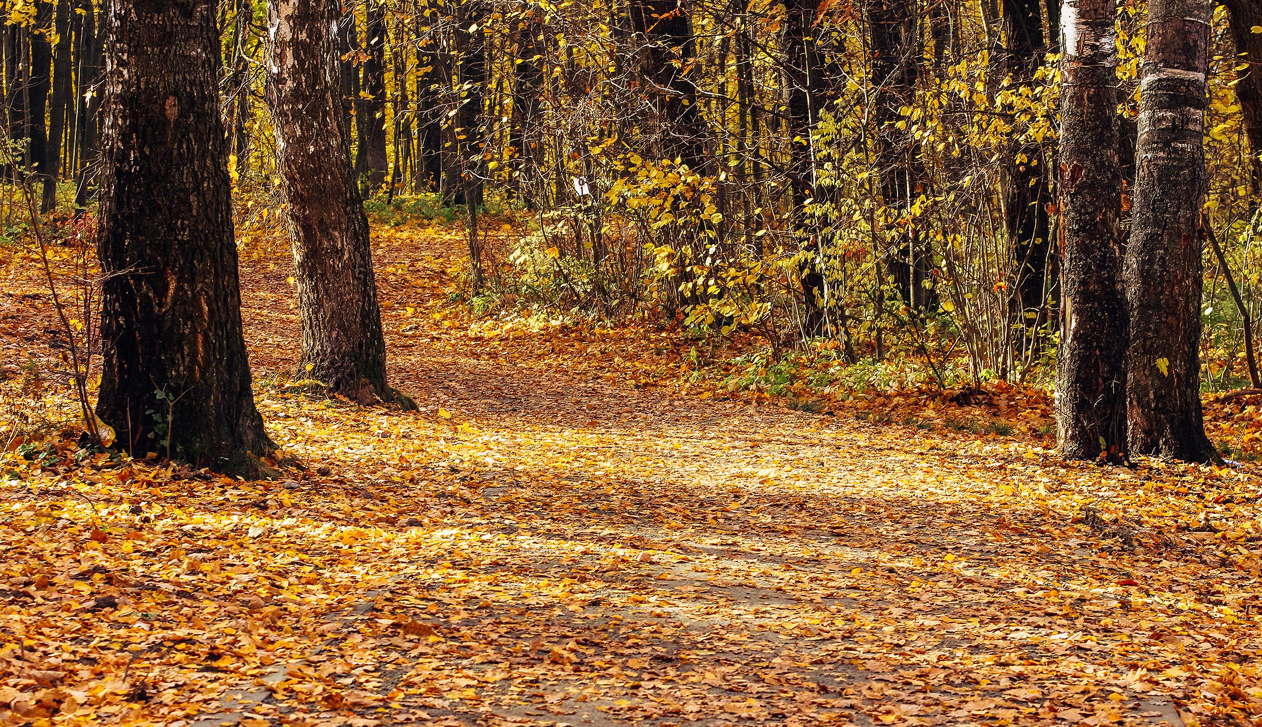 Набивные дорожки — чтобы было удобно и ходить и бегать.