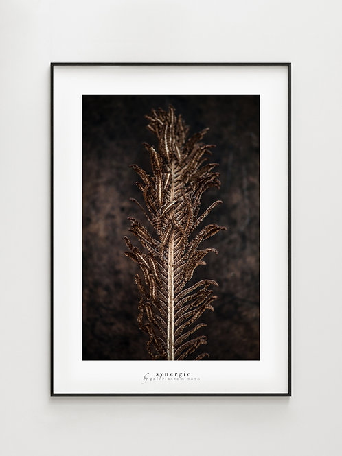 Winter Fern - plakat