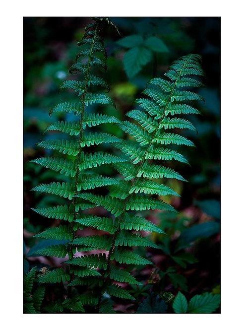 Forest Fern #1 - plakat
