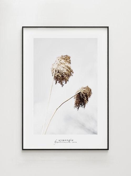 Wind grass#2- plakat