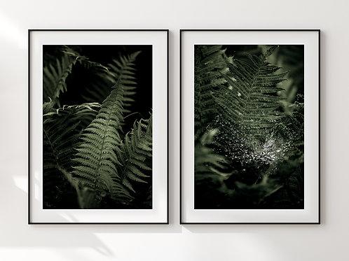 Ferns Set