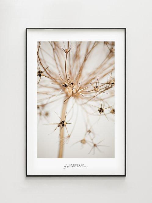 Winter Allium - plakat