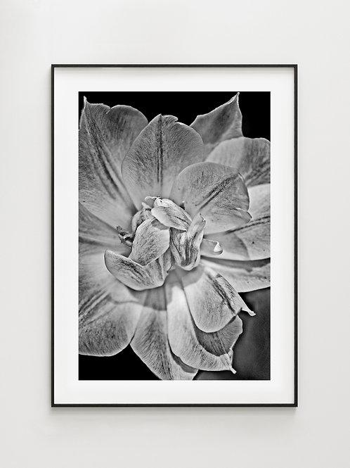 Flower #1- plakat