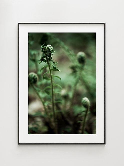 Forest Fern #2 - plakat
