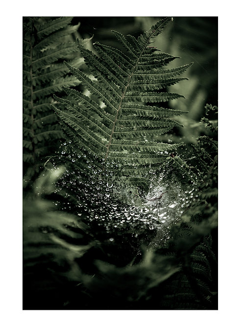 Forest Fern #4 - plakat