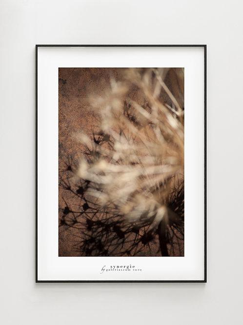 Allium Shadow#3 - plakat
