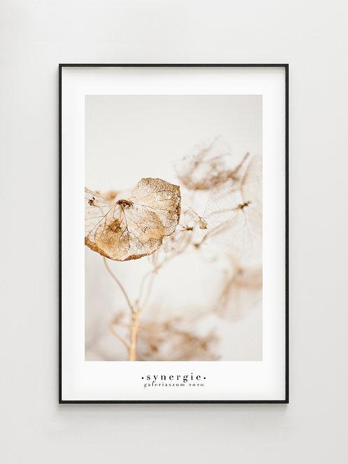 Hydrangea #3- plakat