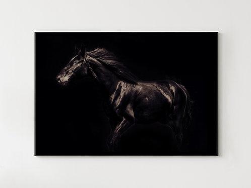 Koń Kary - obraz na płótnie