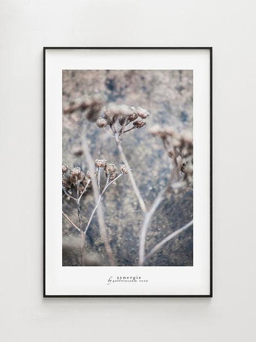 Winter Meadow - plakat