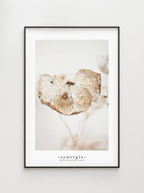 Hydrangea #2- plakat