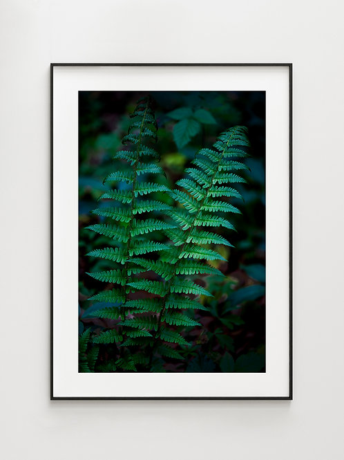 Forest Fern #1 - plakat