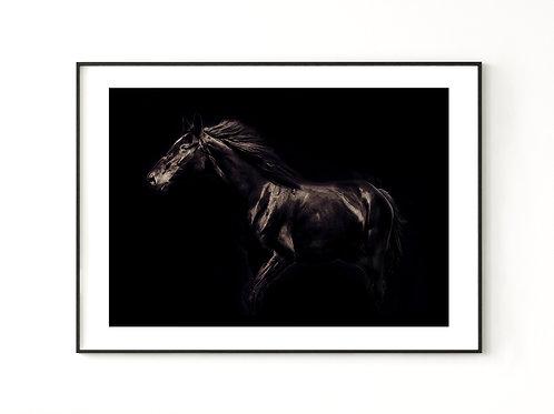 Koń Kary - plakat