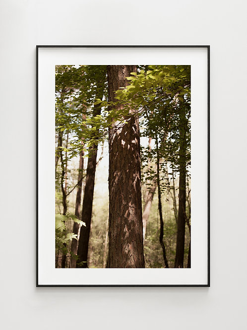 Forest Golden Tree - plakat