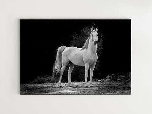 Biały koń - obraz na płótnie