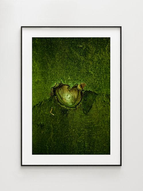 Forest The HeartEye - plakat