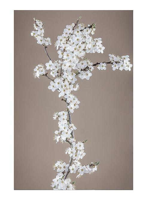 Spring Plum - plakat