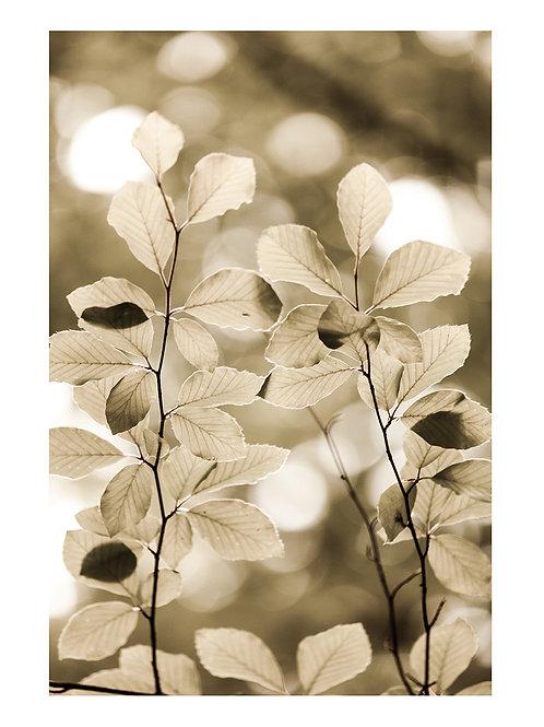 Forest Golden Leaves  - plakat