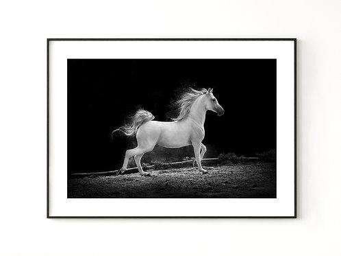 Koń siwy #1  - plakat