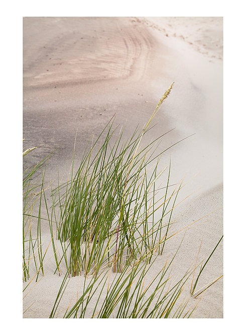 DUNES#4 By the Sea - plakat