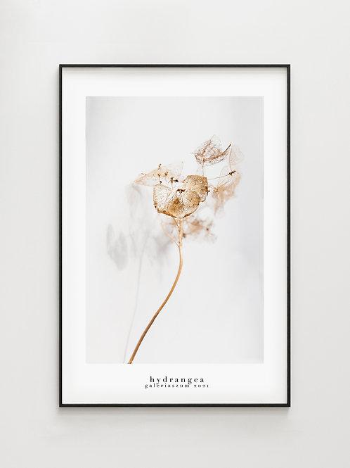 Hydrangea #1- plakat