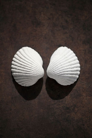shells duo male.jpg