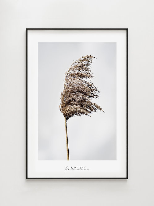 Wind grass- plakat