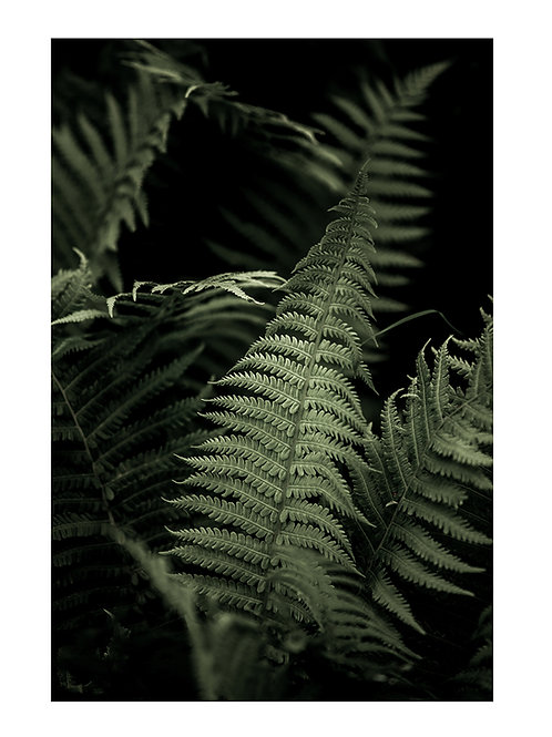 Forest Fern #3 - plakat
