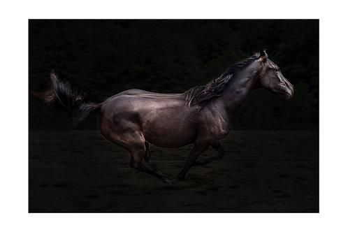 Koń Kasztan - plakat
