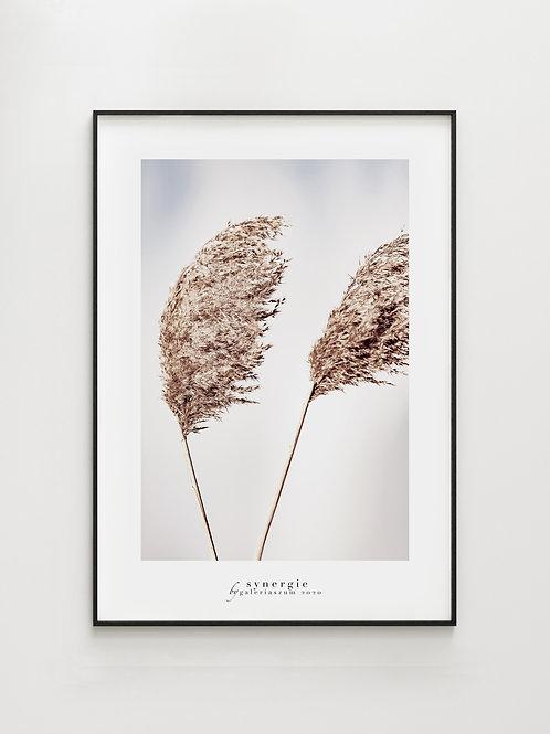 Wind grass#3- plakat