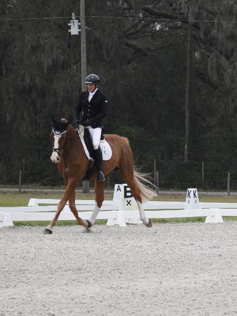 Cabin Master - Stallion | meyerhoffshowhorses