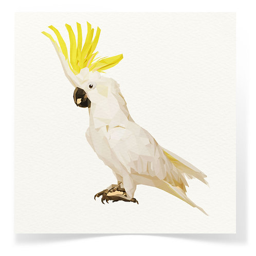 Cockatoo Greeting Cards  3pack