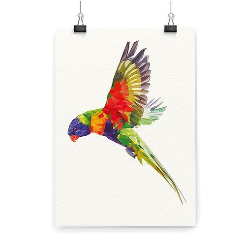 Lorikeet Flying Wall Art Print