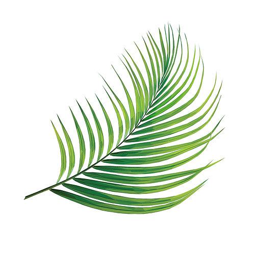 Palm Leaf Digital Download