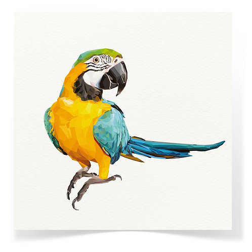 Macaw Parrot Greeting Cards 3pack